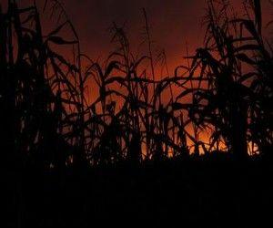 Larson's Haunted Corn Maze   Datang Tak Di Jemput, Pulang Minta Ongkos – Tanpa Bicara Was Here