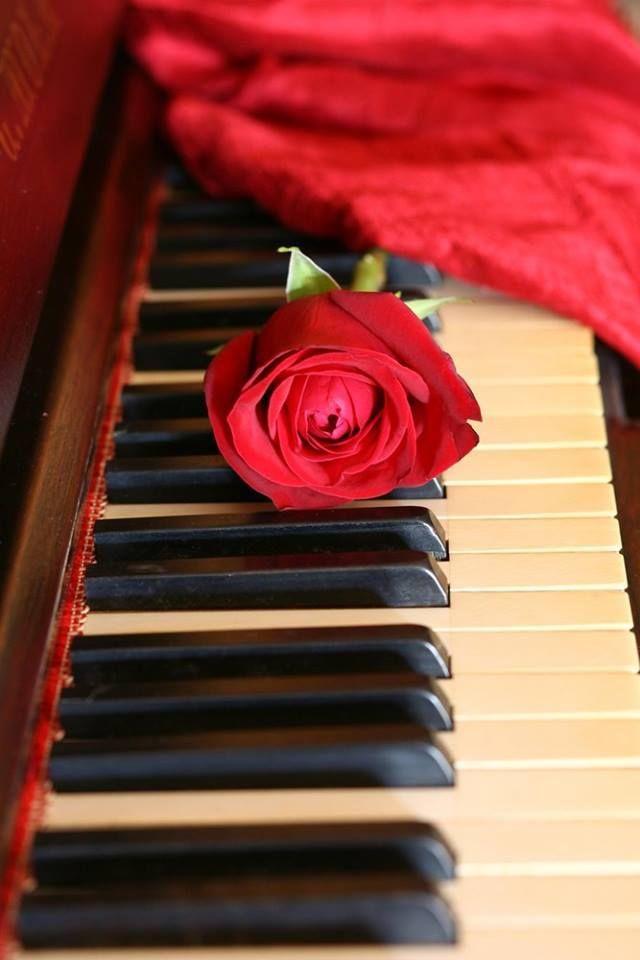 ^Das muitas cores, a mais simbólica. Das muitas cores, a mais intensa! Chamativa, como a rosa vermelha que se diferencia de todas as outras do jardim^