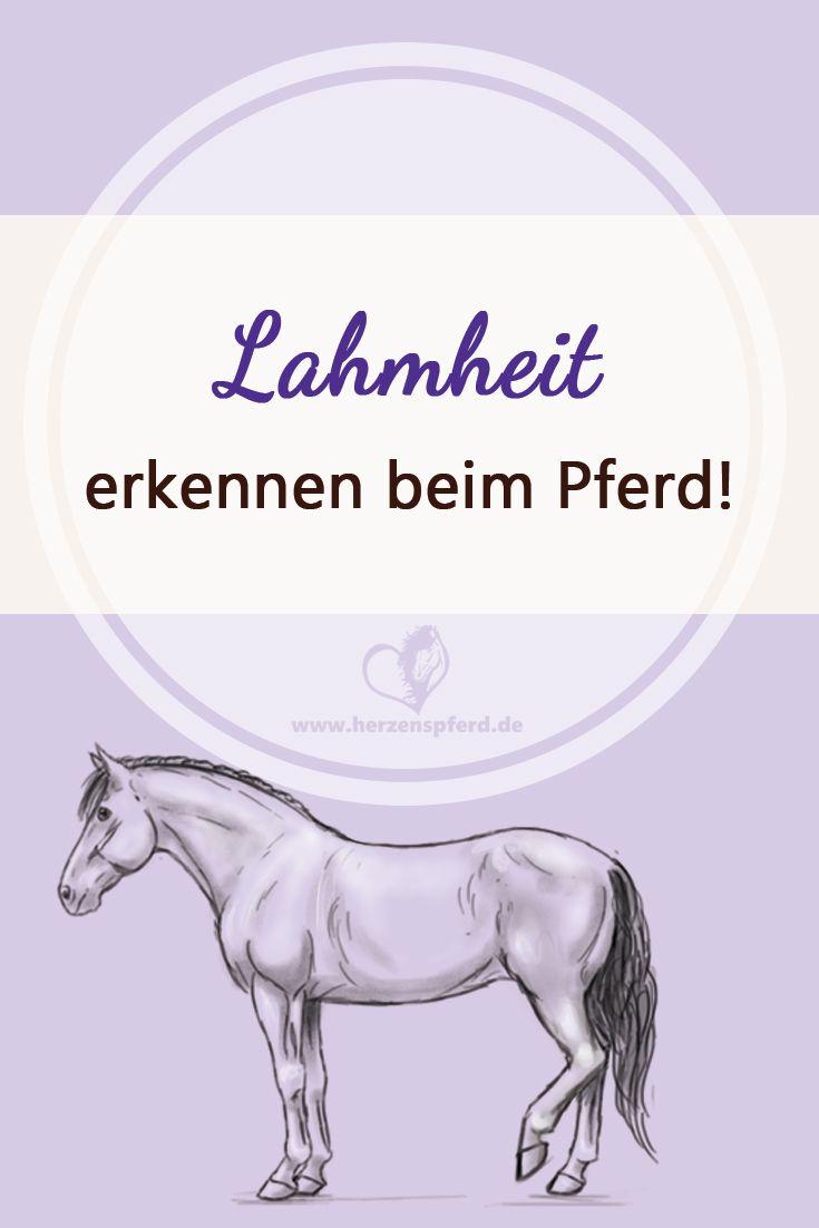 Lahmheit erkennen beim Pferd - was jeder Reiter wissen sollte!
