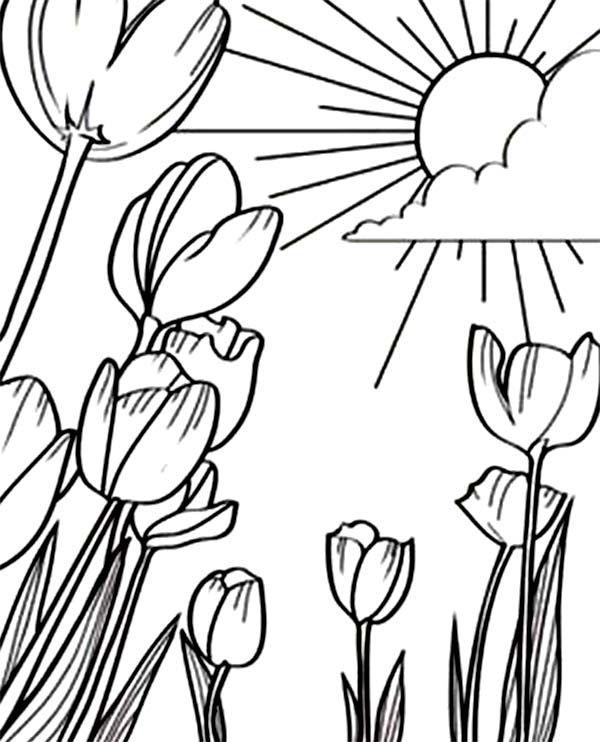 Tulips A Beautiful Sunshine