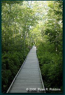 Bangor City Forest Orono Bog boardwalk