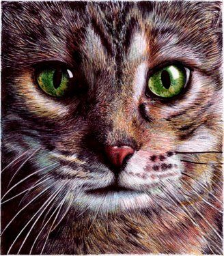 """It doesn't seem possible, but this cat portrait, which is small – about the size shown here – was drawn by Portuguese artist and attorney Samuel Silva with ballpoint pens."""