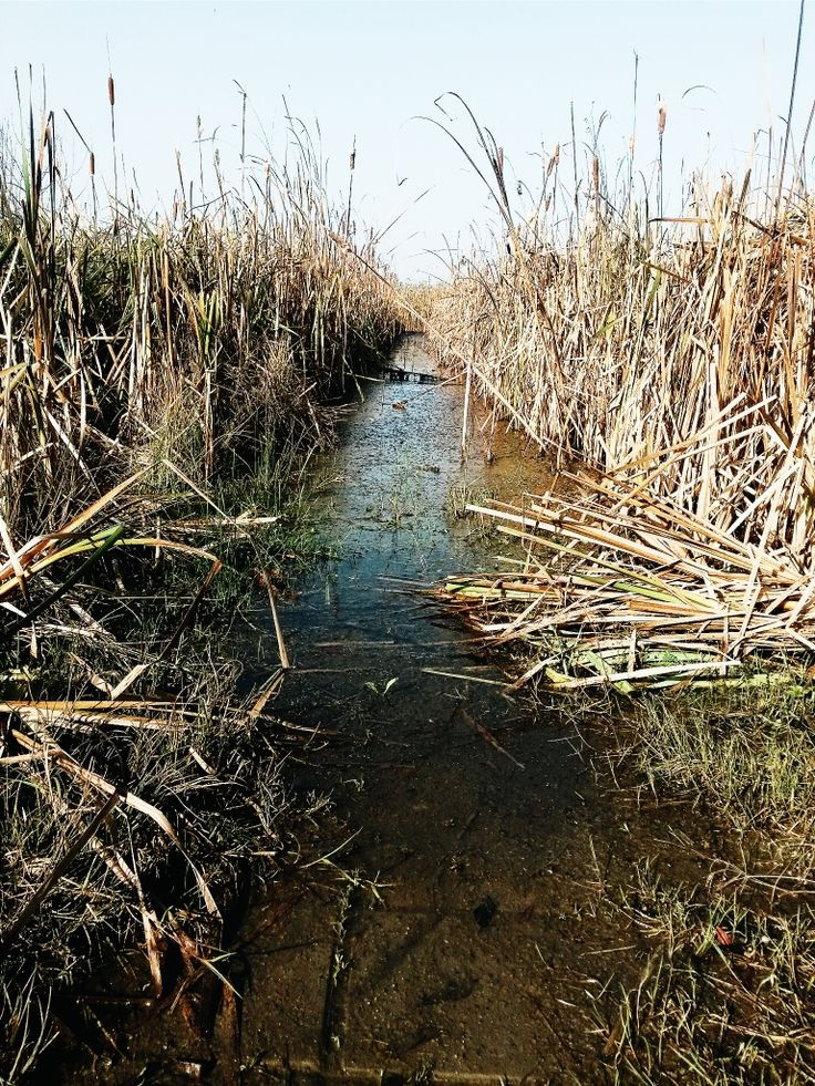 #swamp autumn