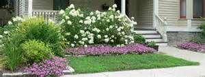 Before, the area in front of the Limelight hydrangeas needed mowing. I ...