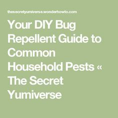 Your DIY Bug Repellent Guide to Common Household Pests « The Secret Yumiverse