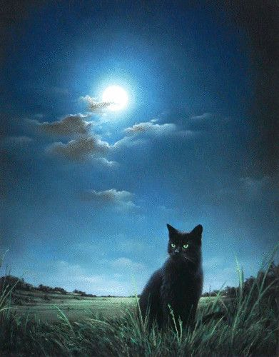The Midnight Cat - black cat patiently waiting, listening in a green pasture under dark skies being filled with blue light by the full moon. This is Scooter :)  I don't have any credit info on this :( if you have any, please leave a note in the comments. Thank you.