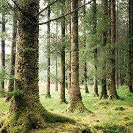 muurdecoratie wanddecoratie fotocollage natuur claire droppert bomen woud