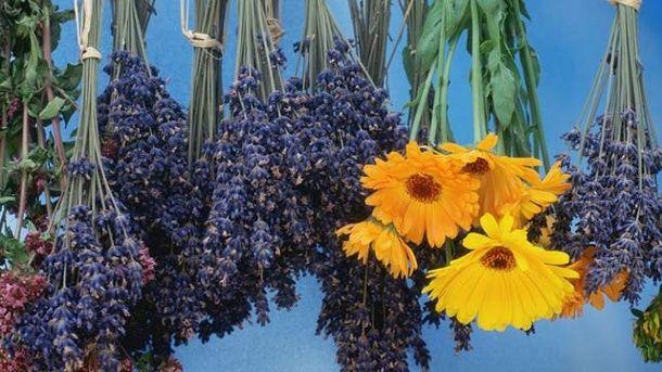 Blumen trocknen: Den Strauß kopfüber aufhängen (Quelle: imago/ARCO IMAGES)