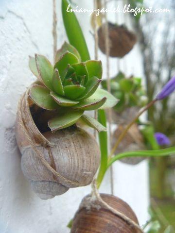 wiszący mini ogród w muszlach