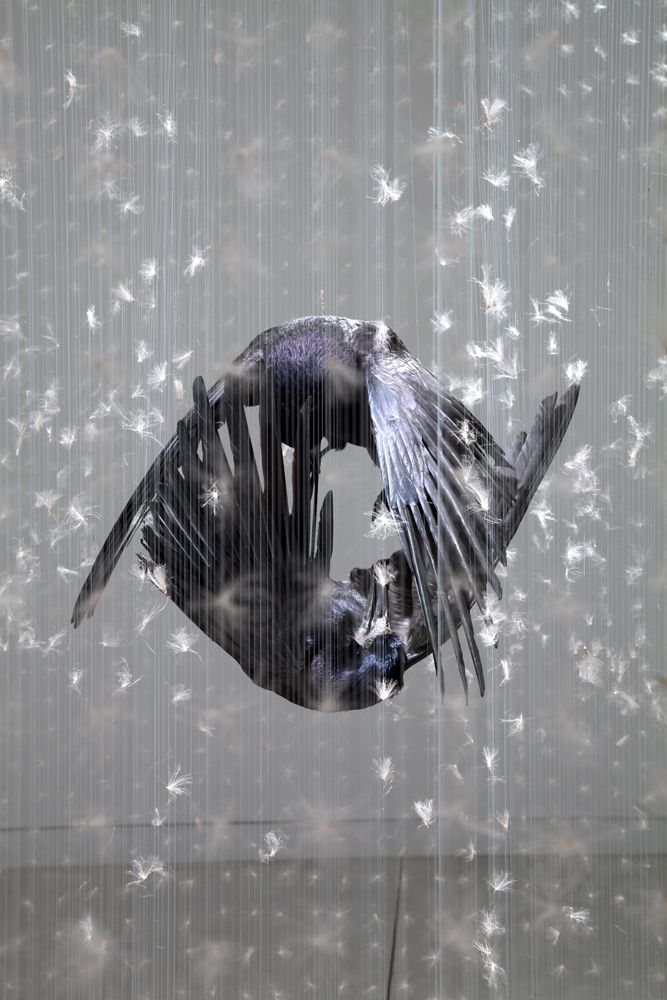By Claire Morgan. Instalations using taxidermy and dandelion seeds, I'm sold. Check out her website!