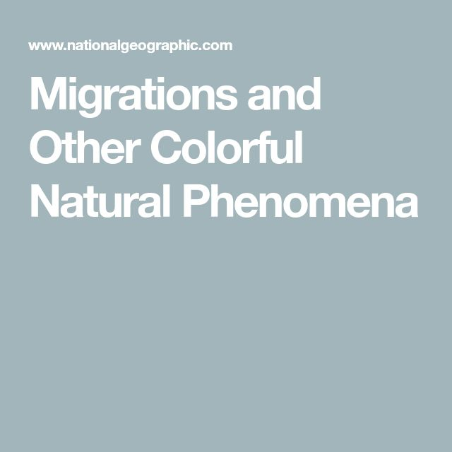 Migrations and Other Colorful Natural Phenomena