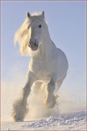 Animals in Winter Wonderland - Horse