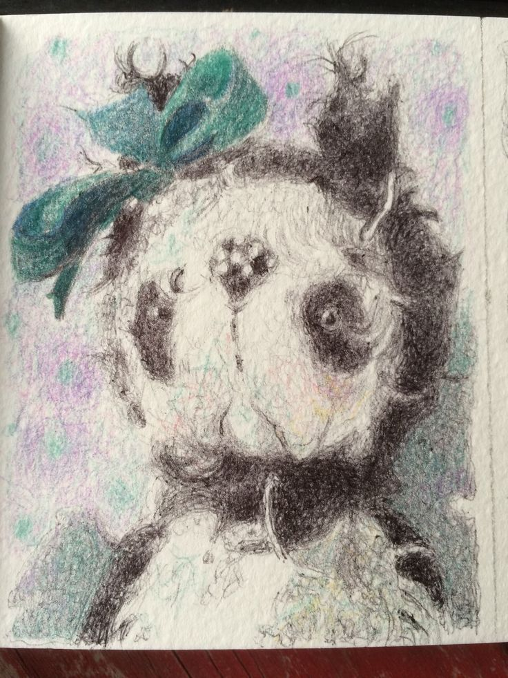 Портрет панды Тани Бурсюк. Графика. Сазенкова Ольга