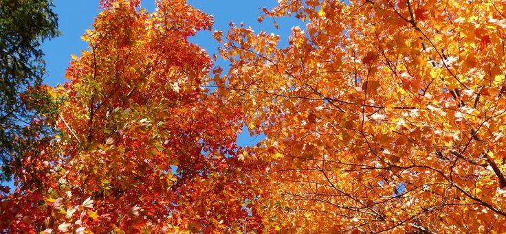 Nos couleurs d'automne