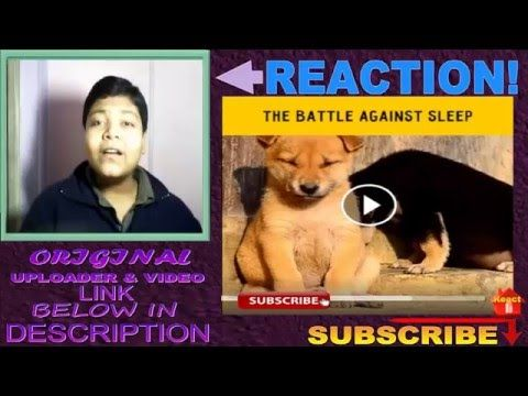 The Battle against sleep REACTION!