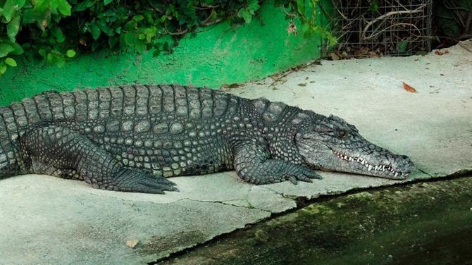 Crocodile Park, Torremolinos, Malaga - Costa del Sol (Espagne)