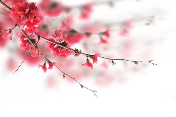 Цветы : 2057