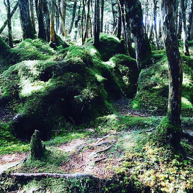 【anne.panne7】さんのInstagramをピンしています。 《赤毛のアンです(^-^)/ 白駒池の周りを歩いて行くと… 苔生したもののけの森が広がっています まるで屋久島を歩いているかのよう 苔好きには聖地ですね🌿 #八ヶ岳 #苔 #森林 #トレッキング #白駒池  #森 #ガーデニング #秋 #庭 #旅 #山歩き》