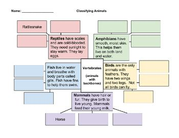 This graphic organizer will help your students classify the various types of vertebrates: reptiles, amphibians, mammals, fish, and birds.  There is also a venn diagram for them to compare and contrast two groups of vertebrates. There are four versions of the graphic organizer: color coded with definitions, color coded without definitions, black and white with definitions, and black and white without definitions.