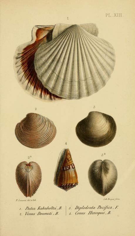 1860 I Journal de conchyliologie