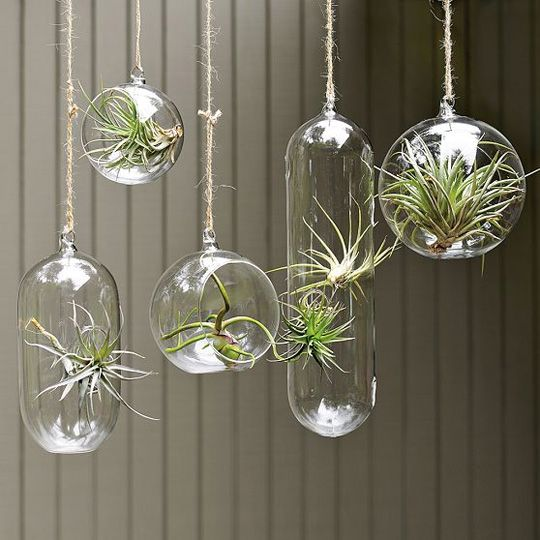 airplants in glass bubbles. could try xmas tree ornaments? the plants purify indoor air
