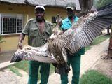 Moholoholo Animal  Rehabilitation Centre  close to Hoedspruit