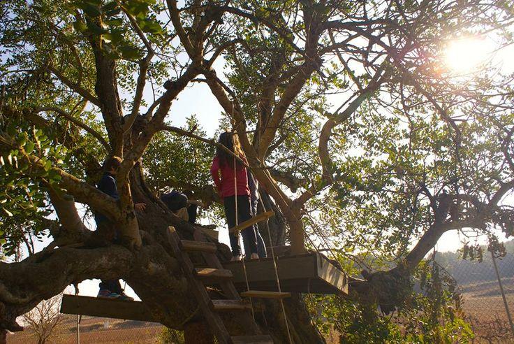 Casa de l'arbre feta pels mateixos/es nens/es. N'hi ha un munt per aprendre aquí. Tree house made by children themselves. There is a lot to learn here!