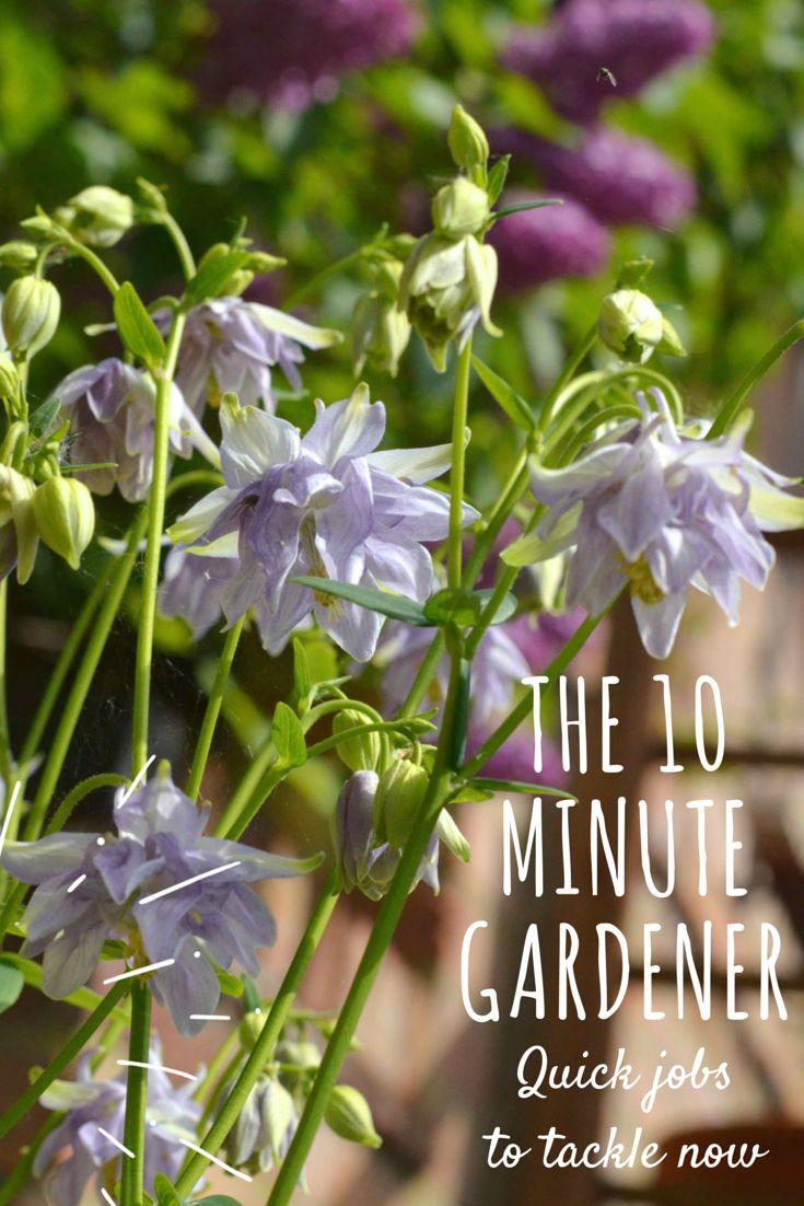 The 10 Minute Gardener   Quick Gardening Jobs For Late Spring