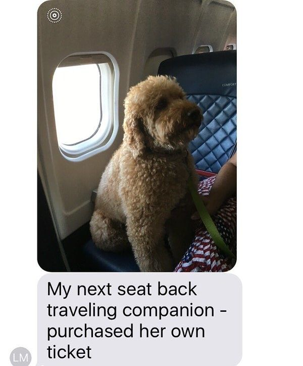 This guy who has the best seat in the house. | Just A Bunch Of Beautiful Dogs On Planes