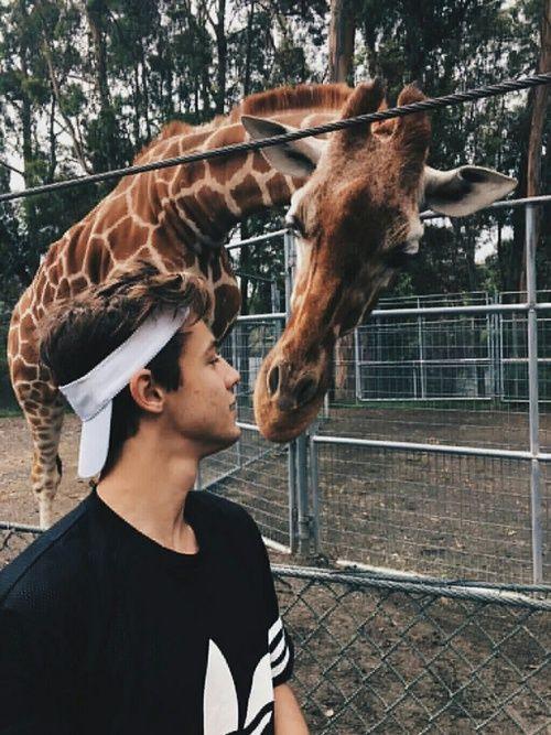 Esa jirafa tiene suerte