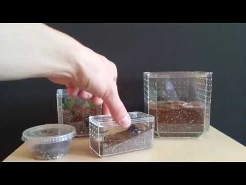 Easy Spiderling and Tarantula Enclosures From Hobby Lobby Display Cases - YouTube