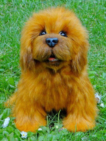 Little puppy of the Tibetan Mastiff By Ermoha - Bear Pile