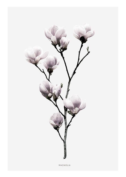 Poster mit Magnolienblüten.