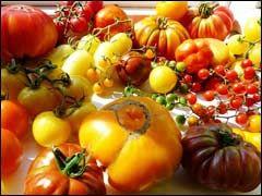 Помидоры: сбор и хранение семян