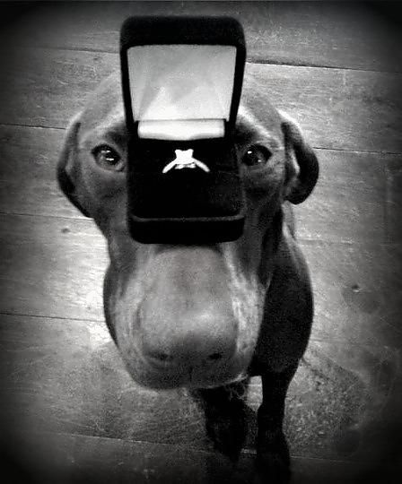 engagement pictures with dog   My Proposal « Weddingbee Gallery  Kevyn - look what I just saw floating around Pinterest...ain't that jake?