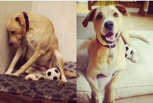 La vie transformée du chien le plus triste du monde