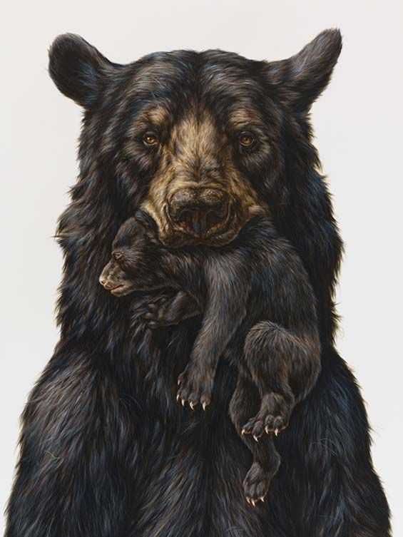 George Boorujy's Hyper-Realistic Paintings Confront The Viewer With Intense Animal Gazes  Ink on Paper- Ink on Paper