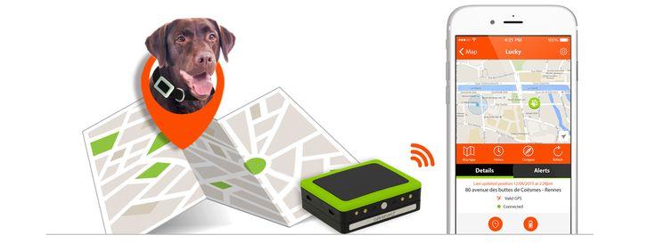 Anti wegloop halsband voor honden ● Dankzij de gebiedsbewaking weet u wanneer uw hond van huis wegloopt. U kunt een onbeperkt aantal gebieden instellen: thuis, vrienden, buren... U weet wanneer uw hond het gebied binnenkomt en verlaat.  Met de mobiele app kunt u uw hond gemakkelijk terugvinden. Ideaal voor een wegloophond!● Als uw hond zoek is, wijst Weenect u de weg naar uw hond. U ziet de te volgen route en de afstand tot uw hond.  Er zijn drie soorten lokalisatie mogelijk om uw hond terug…