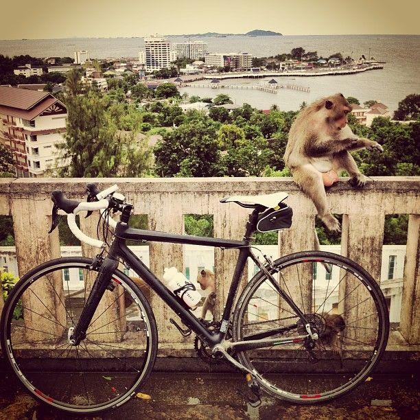 Colnago with monkey @ Khao Sam Muk #bicycle