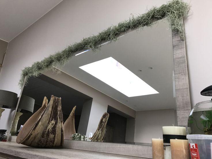 Usneoides rond een bamboestok gewikkeld met nylondraad. De stok achter de spiegel vastgemaakt met haakjes uit ijzerdraad. 🌿 Spaans mos is een luchtplantje en heeft dus geen aarde nodig om te groeien. Af en toe met water besproeien en genoeg licht voorzien 👌🏼