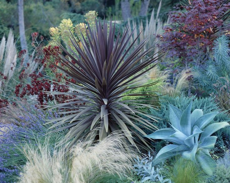 Grasses, cordylines, agaves, yuccas, cold tolerant aloes, lavender,