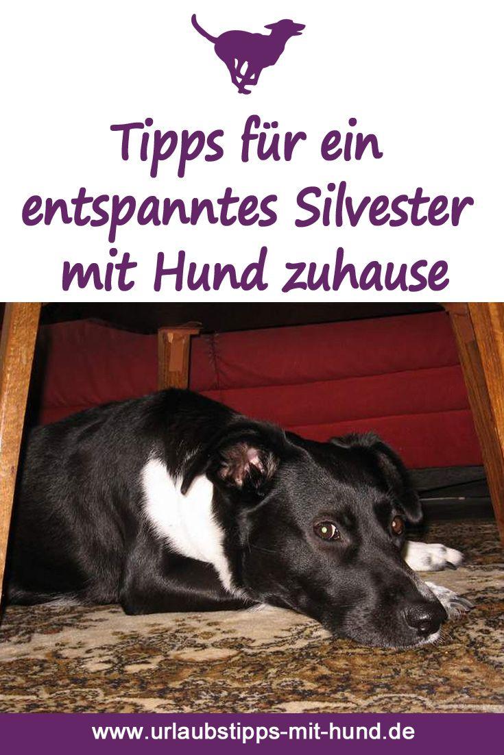 Tipps Fur Ein Entspanntes Silvester Mit Hund Zuhause Silvester Mit Hund Tipps Silvester Hunde