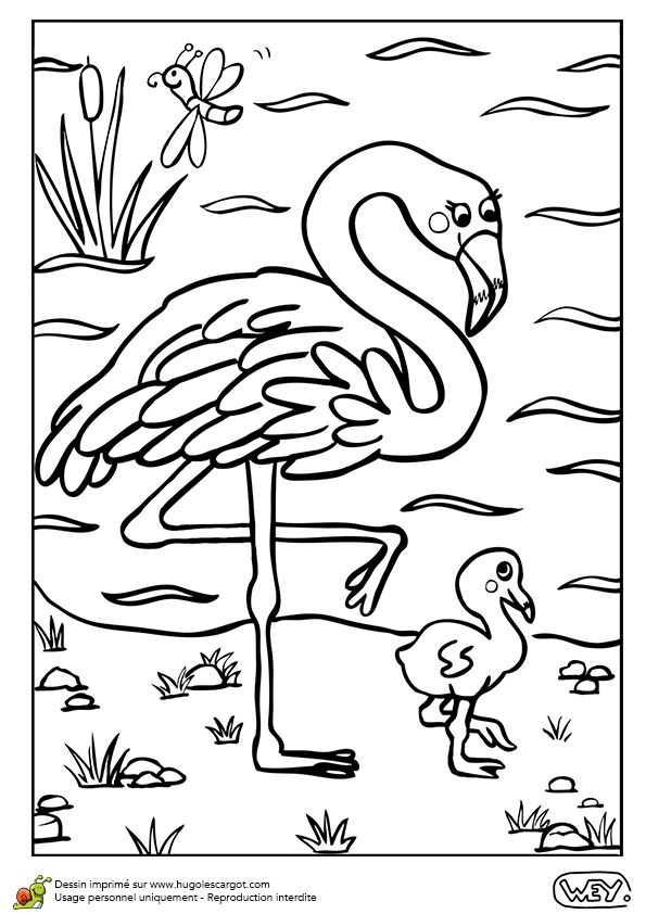 Dessin à colorier d'une maman flamant rose et de son petit - Hugolescargot.com