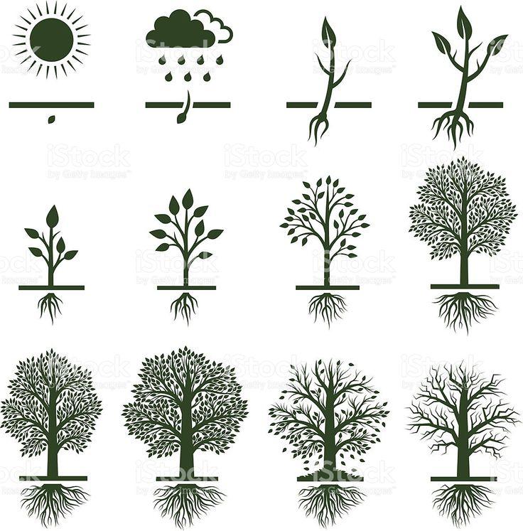 картинка как растет дерево даже десертные