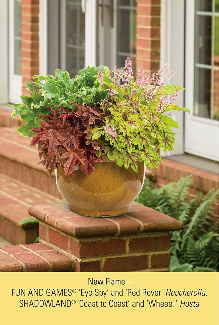 Mix Your Perennials For A Patio Container Full Of Color And Texture This Combination Is Best Container Gardening Flowers Container Gardening Container Flowers