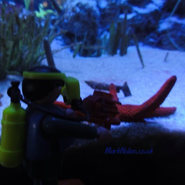 Patrick is that you? #Playmobil #starfish #diver #underwater #sea