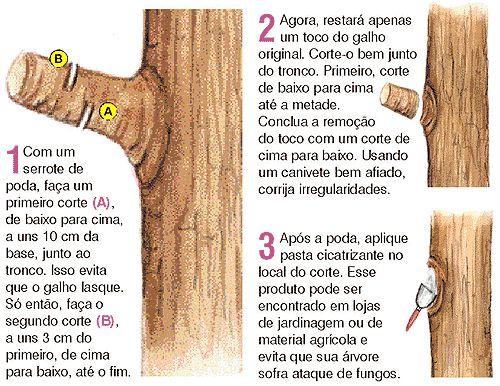 No dia da árvore me perguntaram como e quando seria a melhor época para podar um Ipê Roxo! Fui buscar a informação e encontrei um manual da prefeitura para orientar a poda urbana. Achei o material …