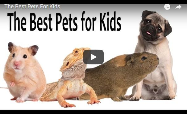 What Are Some Best Pets For Kids Best Small Pets Small Pets For Kids Animals For Kids