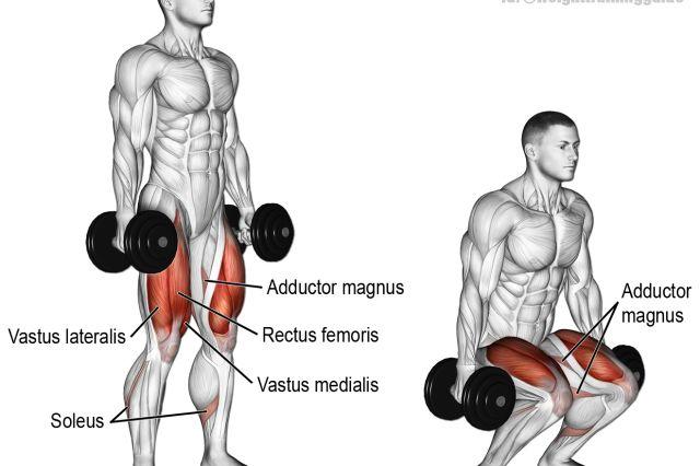 Dumbbell squat exercise