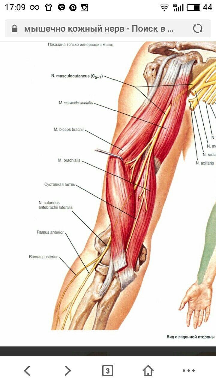 Gemütlich Fallstudien In Anatomie Und Physiologie Zeitgenössisch ...